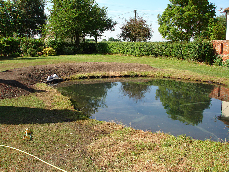Natural fish pond essex aqua maintenance for Sunfish in a backyard pond