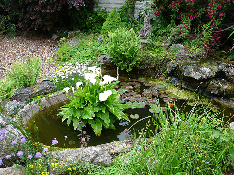 how to keep a small pond clean