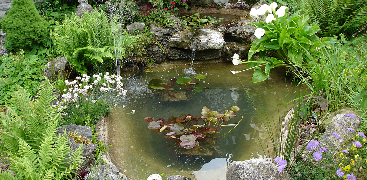small pond clean epping aqua maintenance